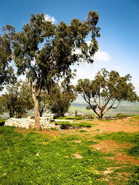 450px-On_Mount_Gilboa,_Israel
